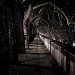 Fotografia in Roma - Passeggiando sul Lungotevere - Michele Settembre