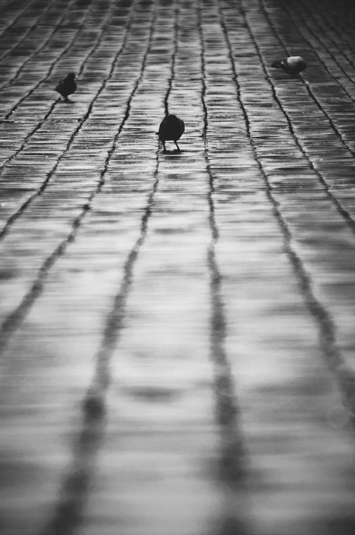 Domenica, Piazza del popolo, Roma - Michele Settembre - Fotografia in Roma