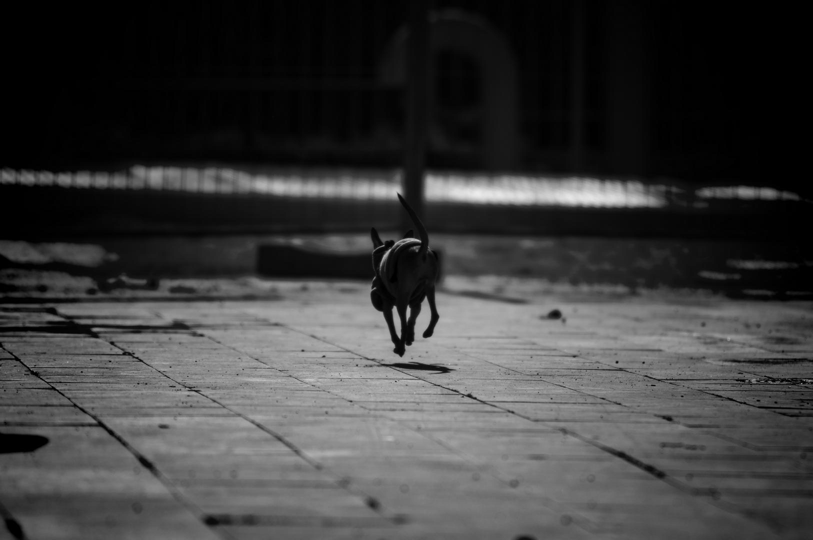 Fotografia in Roma - Domenica mattina a San Giovanni - Michele Settembre